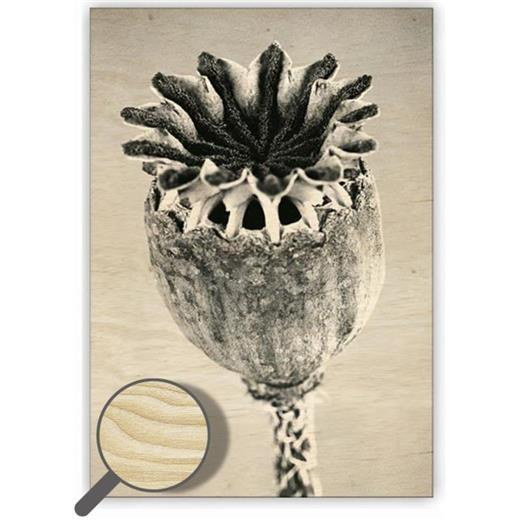 Dřevěný obraz  Poppyhead